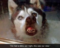 Funny Animal Pictures - View our collection of cute and funny pet videos and pics. New funny animal pictures and videos submitted daily. Funny Cute, Funny Pics, Funny Pictures, Funny Memes, Hilarious Pictures, Super Funny, That's Hilarious, Crazy Funny, Dog Memes