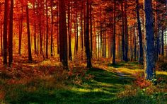 fall-forest-nature-path-1596