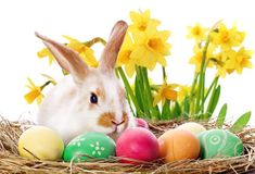 What is the Meaning of all This? ( An Easter Message) – Walking With the Word Easter Art, Easter Bunny, Easter Eggs, Easter Meaning, Cute Bunny Pictures, Bunny Images, Soap Images, Easter Messages, Easter Story