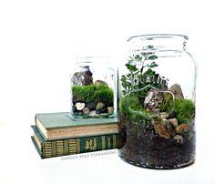Desktop Canning Jar Terrarium / Glass Planter & Fern Moss / Home Decor