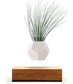 LYFE - Original, Authentic Floating Levitating Plant Pot for Air Plants (Oak Base, Geodesic Silicon Planter) : Garden & Outdoor