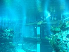 """The aquarium in """"The Seas"""" is so large that the """"Spaceship Earth"""" sphere can fit inside it. 33 Things You Probably Didn't Know About Disney Parks Viaje A Disney World, Disney World Trip, Disney Vacations, Disney Trips, Disney Dream, Disney Love, Disney Stuff, Walt Disney Co, Disney Magic"""