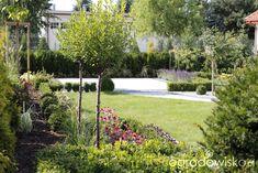 Metamorfozy ogrodowe - strona 41 - Forum ogrodnicze - Ogrodowisko