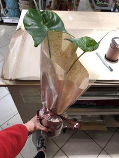 Jeg lærer hun som jobber her å pakke inn diverse, denne gang en plante!