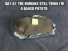 Day 42: The humans still think I'm a baked potato.