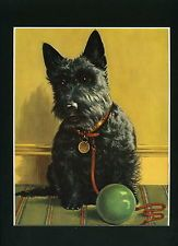Vintage DOG Print - SCOTTISH TERRIER by WINIFRED MARTIN 1960 Mounted #4