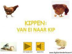 * ▶ Kippen: van ei naar kip