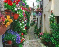 Flores na Fachada de Casas