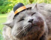 Top Hat for Cats - Tangerine Tango - Orange Cat Dog Hat - Thanksgiving Hat - Harvest Joy