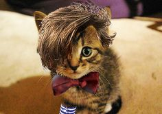 Matt Smith Kitty!!!