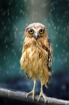 """Вот такая зима..."" Wet Owl 