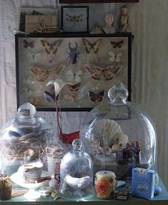 I'm a big fan of Sibella Court - love the bell jar look The Bell Jar, Bell Jars, Cabinet Of Curiosities, Natural Curiosities, Decoration Shabby, Deco Originale, Green Rooms, Displaying Collections, Do It Yourself Home