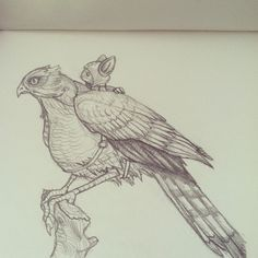 Sparrowhawk and mouse-rider