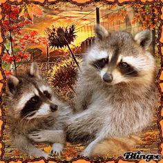 Kitsch, Cute Baby Cartoon, Farm Animals, Cute Animals, Gif Photo, Wildlife Paintings, Farm Barn, Animation, Fall Pictures