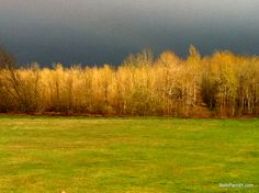 Just before the storm hit.  I took this picture facing East towards the Columbia Gorge.
