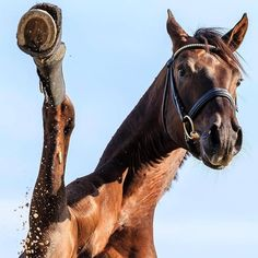 credit photo by 📷: High five! Did you ride today? Funny Horses, Cute Horses, Pretty Horses, Horse Love, Beautiful Horses, Horse Photos, Horse Pictures, Animals And Pets, Cute Animals