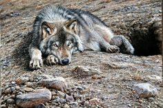 Alan M Hunt Wildlife Artist UK - Art Original Wildlife Paintings