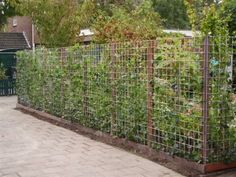 om de 1,5mtr tuinpaal+houder in grond. slaan. Op de palen groen gaas+klimop