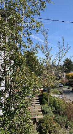 Seattle, Plants, Plant, Planets