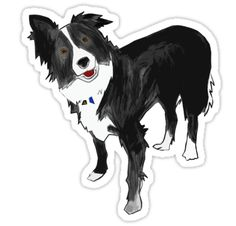 A Border Collie design (without background) of our dog Link – love that cheeky head tilt! • Also buy this artwork on stickers, apparel, phone cases, and more.