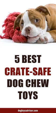 5 Best Crate Dog Toys 5 Best Crate Dog Toys Here are the 5 best crate-safe chew toys for dogs. These toys will keep your dog busy in a crate without you having to worry about him destroying them. Diy Chew Toys For Dogs, Puppy Chew Toys, Diy Dog Toys, Best Dog Toys, Pet Toys, Best Puppies, Toy Puppies, Cavachon Puppies, Goldendoodles