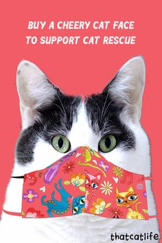 3 Places to Order a Cool Cat Face Mask Now to Help Save Kitties! Rep Your Rescue Love on Your Face! Smile in the face of the global pandemic and support cat rescue by purchasing a face mask from these great cat cafes. #facemask Cute Cat Face, Cat Face Mask, Cat Cafe, Cat People, Cat Toys, Cool Cats, Kittens, Smile, Pets
