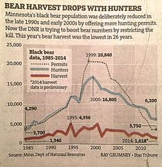 """""""Bear Harvest Drops With Hunters"""" graphic from Star Tribune from 2014."""
