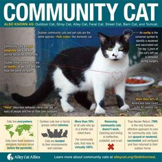 It's no secret at a Cat Wisdom It's National Feral Cat Day and the best info about what you can do in your community is at Alley Cat Allies. Tnr Cats, Feral Cats, Alley Cat Allies, Stray Cat Strut, Cat Info, Cat Posters, Outdoor Cats, Domestic Cat, Cat Day