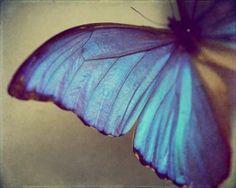 •●•Butterfly•Ƹ̵̡Ӝ̵̨̄Ʒ•Blues•●•