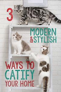 """If you're a cat lover, chances are by now you're very familiar with the term, """"catification."""" Coined by cat-behaviorist, Jackson Galaxy, catifying your home simply means creating a feline-friendly environment..."""