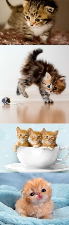 Cats Kittens Video Compilation 2015 NEW The Most Popular and Fun ! ?     MORE KITTENS HERE  http://www.youtube.com/user/TheFederic777?sub_confirmation=1  FACEBOOK:  https://www.facebook.com/KittensLoveForever/  GOOGLE +: https://plus.google.com/u/0/115624639852623703105/posts  BLOG:  http://look-how-cute-kittens-2.blogspot.com/  BLOG:  http://make-dogs-be-happy.blogspot.com/  #KittensCatsMeowing #KittensCatVideo   #KittensCatsFunny #KittensCatCompilation