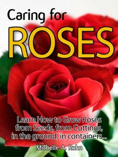 Caring for Roses - Learn How to Grow Roses from Seeds, from Cuttings, in the Ground, in Containers... Special Edition!