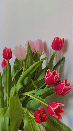 Flower Aesthetic, Pink Aesthetic, Korean Aesthetic, My Flower, Beautiful Flowers, Instagram Story Ideas, Pretty Pictures, Aesthetic Pictures, Aesthetic Wallpapers
