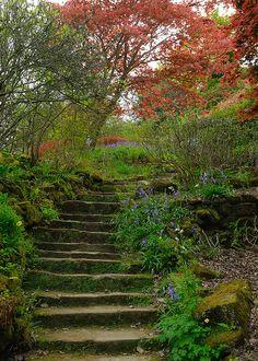 garden steps up from river bank Backyard Farming, Backyard Garden Design, Backyard Retreat, Backyard Projects, Terrace Garden, Garden Planters, Garden Steps, Garden Paths, Amazing Gardens
