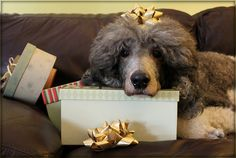 The Greatest Gift of All. 51/52 by SpooAddicts & the SpooCrew, via Flickr