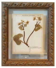 Pressed Botanical w/Field Notes, C. 1910 - Faded Rose Antiques LLC - Brands One Kings Lane Family Room Design, Dining Room Design, Decorative Accessories, Decorative Items, Antique Wall Decor, Elephant Logo, European Furniture, Field Notes, Wood Glass