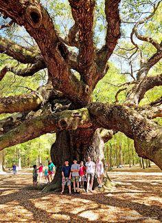 the angel oak tree south carolina low country