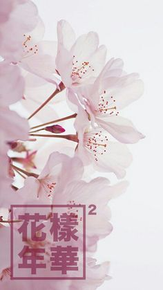 wholepapers: sakura for Flower Wallpaper, Iphone Wallpaper, Stencil Decor, Watercolor Artwork, Pretty Wallpapers, Amazing Flowers, Unique Art, Aesthetic Wallpapers, Painting