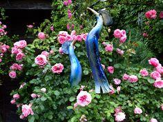 """""""Paradiesvögel"""" und Rosen"""