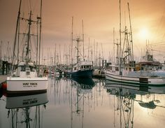 The plethora of boats in Victoria Harbour, British Columbia. #ocean #Canada #Canadian