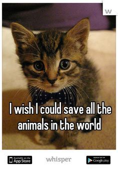 I really do!!! I would give anything to be rich so that I could take in every animal known to man. I would! I would save them all & I would try to put a stop in animal abuse. My life dream is rescue all of God's creatures & take care of them like I know I can.