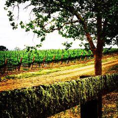 Santa Ynez Vineyards