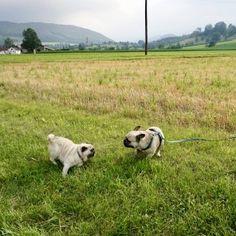 Urlaub mit Hund im Pielachtal im Hotel Steinschalerhof, NÖ   Hundereise Regional, Dogs, Animals, Hiking, Pet Dogs, Viajes, Animales, Animaux, Doggies