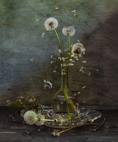 #still #life #photography • photo: Улетающий май... | photographer: Olga | WWW.PHOTODOM.COM