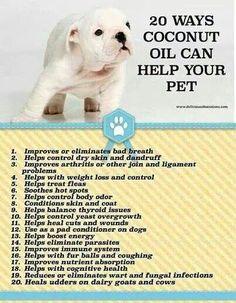 Coconut Oil & Pets