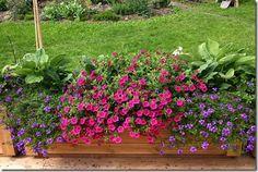 Wenches hage: Tips til høst- og vintersysler Tips, Plants, Gardening, Outdoor, Patio, Cash Register, Outdoors, Lawn And Garden, Plant