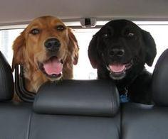 帶狗出遊 導讀:秋高氣爽,悶在家中已久的愛犬也想活動活動了!主人們,想帶愛犬出外郊遊踏青,可得先判斷狗兒身體狀況、然後備足外出用品才行。當然啦!也要記得攜帶犬類出門應注意的事項,才能讓旅遊盡興又安全!