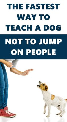 Your dog is likely to jump up when trying to get your attention or when they are excited to see you. Here's a simple way to get your dog to stop jumping up. Brain Training, Dog Training Tips, Separation Anxiety, Positive Reinforcement, Dog Chews, Large Dogs, Dog Toys, Best Dogs, Have Fun