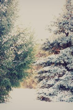 28 Super Ideas For Snowy Pine Tree Narnia I Love Winter, Winter Day, Winter Is Coming, Winter Snow, Winter Christmas, Winter White, Christmas Time, Snowy Day, Snowy Woods