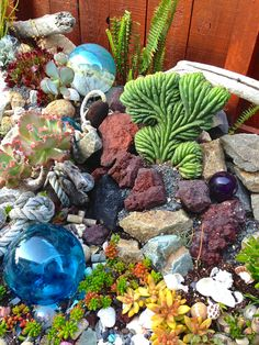 Exotic Succulents for an ocean themed garden
